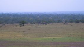 In Distance Are Rare White Rhino Mother With Baby Kenyan Reserve stock photos
