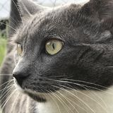 Distance. Cat looking into the distance Royalty Free Stock Photos