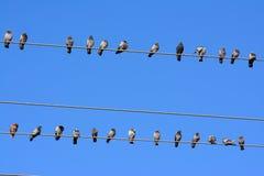 Distance privée de pigeons images libres de droits