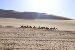 A distance view of a camel caravan tour going through the sand dunes under sunlight in a desert stock photo