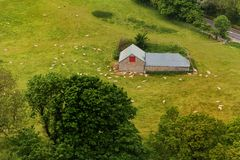 A distant barn in the English countryside surrounded by sheep Royalty Free Stock Image