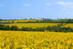 Distant Canola Rape Seed Fields Stock Photos