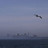 Distant Chicago skyline with seagulls and water Royalty Free Stock Image