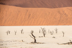 Distant dead dry trees of DeadVlei valley at Namib desert Royalty Free Stock Images