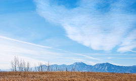 Distant Flatirons Mountains Near Boulder. Golden grasslands and the Flatirons Mountains near Boulder, Colorado in winter with bare saplings on the crest of the Royalty Free Stock Photo