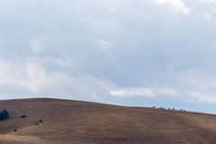 Distant horses. Some distant horses on top of a mountain, beneath a huge sky with clouds royalty free stock photos