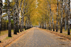 Distant lane in the autumn park. Ths is a picture of the walking lane in the autumn park with golden leaves stock images