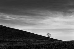 A distant, loney tree on a bare hill, beneath a deep sky with white clouds Stock Photos