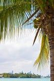 Distant Miami city skyline under a coconut palm, Miami Beach, Florida, USA. Stock Photography