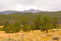 Distant Mountain above a Western Forest Royalty Free Stock Images