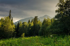 Distant mountains rise above the wild forest. Landscape Stock Photo