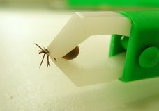 Distant parasite Stock Images