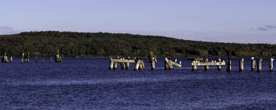 Distant Pilings With Birds Stock Photography