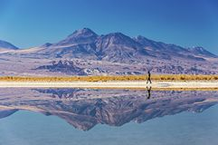 Distant reflections stock photos