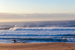 Ocean Waves Beach Surfer Walking. Distant surf rider unidentified walks along the beach with ocean waves of size highlighted in the sunrise light Stock Photos