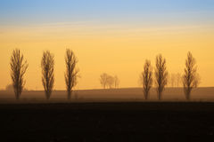 Distant trees silhouettes at sunrise Royalty Free Stock Images