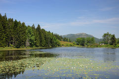 Distant view of Cadillac Mountain Maine Stock Photography