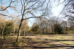 Distant view into Sussex woodland Stock Image