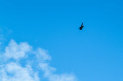 Distant view of a war plane flying in blue sky stock photography
