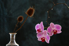 Distel & Orchidee Stock Foto