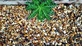 Distel, die unter Felsen wächst Stockfotos