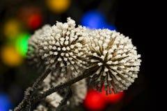 Distel in een de winternacht met bokehlichten op de achtergrond Stock Foto's