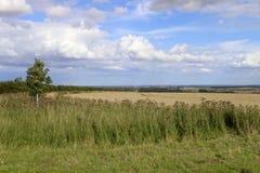 Distelblumen und das Tal von York Stockbilder