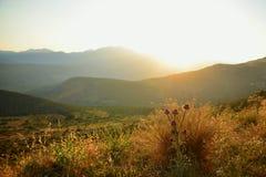 Distels in de bergen bij zonsondergang. Stock Afbeeldingen