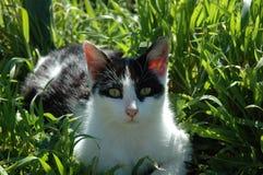 Distenda il gatto Fotografia Stock