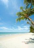 Distendendosi sotto le palme sulla spiaggia di solitudine Immagine Stock Libera da Diritti