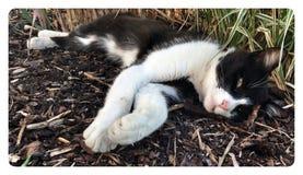 Distensione del gatto Fotografia Stock Libera da Diritti