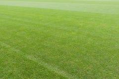 Distesa di tappeto erboso verde immagini stock libere da diritti