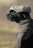 Distinguished dog stock image