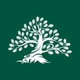 Distintivo enorme e sacro di logo della siluetta della quercia isolato su fondo verde illustrazione vettoriale