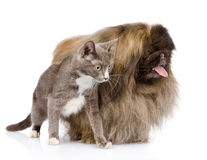 Distogliere lo sguardo del cane e del gatto Isolato su priorità bassa bianca Fotografia Stock Libera da Diritti