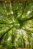 Distorted forest. Distorted circular mirrored view of lush green trees in a forest Stock Photos