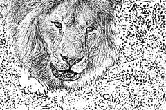 Distressed halftone grunge black and white vector texture -real lion head. Background for creation abstract vintage. Effect with noise and grain Royalty Free Stock Photos