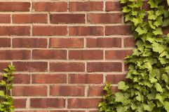 Distressed red brick wall with ivy on it stock images
