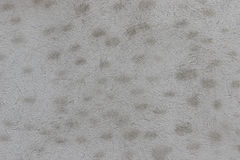 A distressed white wall with dots texture. Good for backgrounds and commercial work royalty free stock photos
