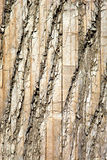 Distressed Wood 3 Royalty Free Stock Photo