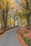 Distretto del lago, Inghilterra Immagine Stock Libera da Diritti