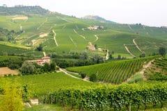 Distretto di Langhe, vigne di Itallian Fotografie Stock Libere da Diritti