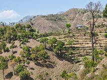 Distretto Himachal Pradesh India di Chamba Fotografia Stock