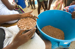 Distributing Beans Stock Photography