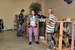 Distribution of charity exhibition of animals from the shelter Royalty Free Stock Images