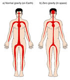Distribution de sang due à la densité illustration de vecteur