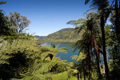 District de lacs Rotorua Image stock