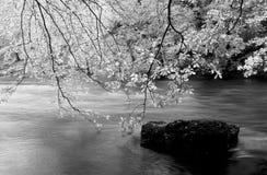 Districto del lago Foto de archivo libre de regalías