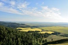 Distrito amarelo de Sharypovo dos campos sob o céu azul fotografia de stock