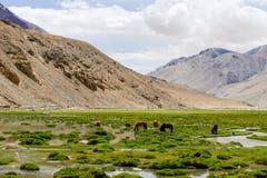 Distrito de Leh, Índia Fotografia de Stock Royalty Free
